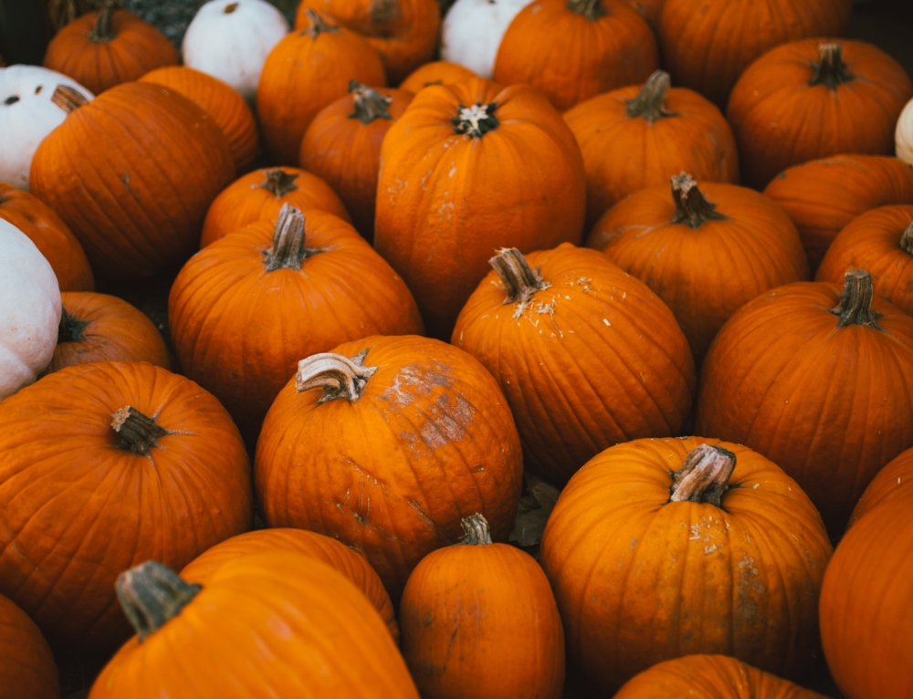 The Ultimate Fall Boise Bucket List