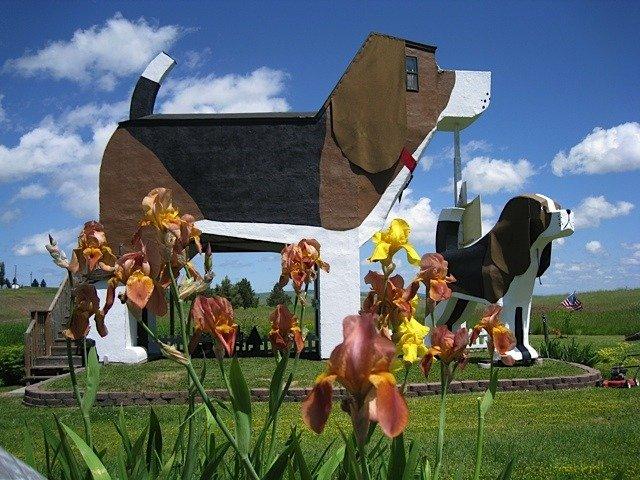 dog hotel in Cottonwood Idaho