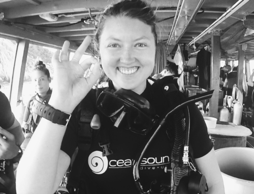 Koh Tao Diving Course: Where I Got Scuba Certified