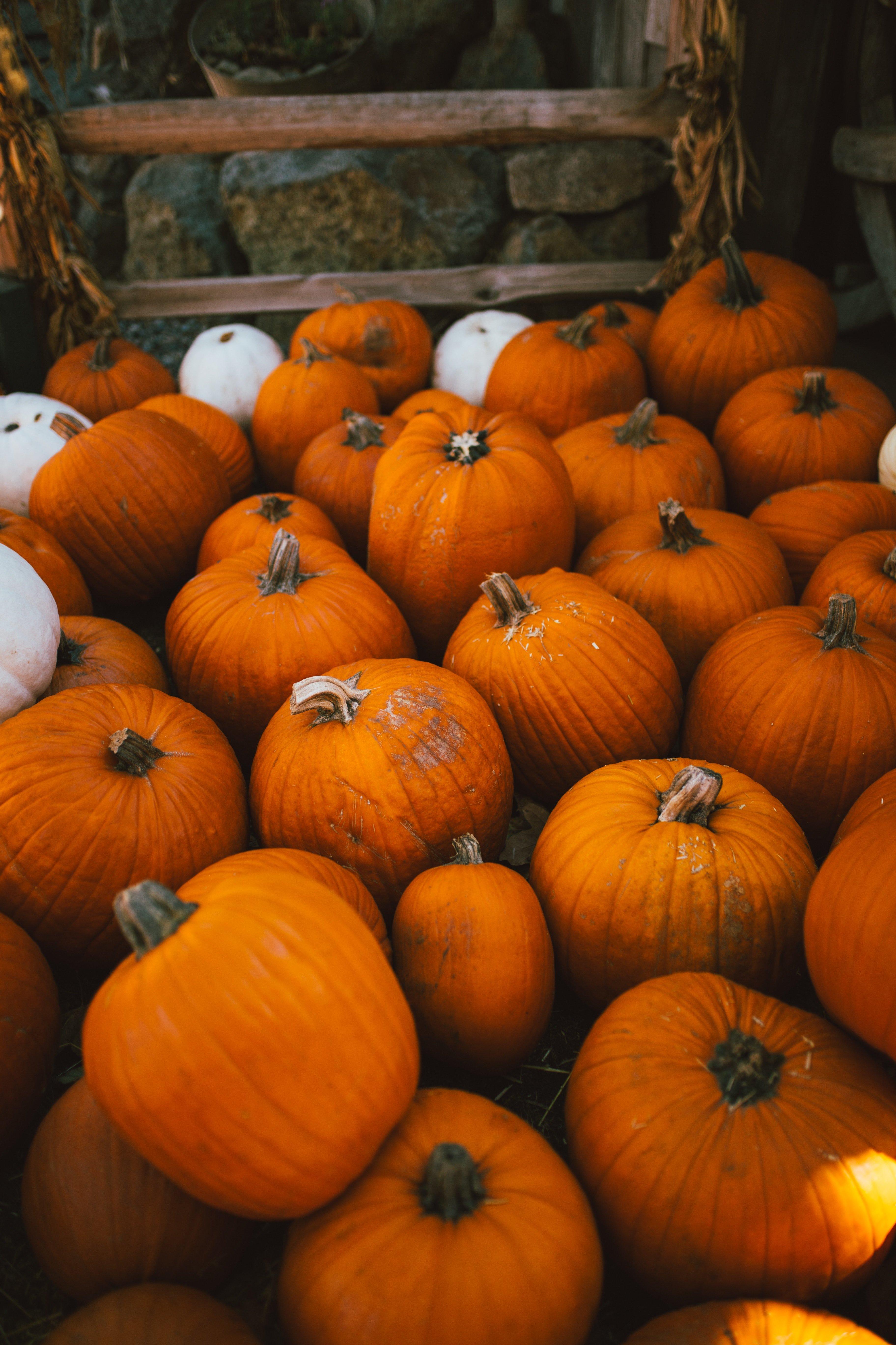 fall boise bucket list