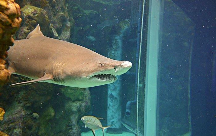 shark coming at me